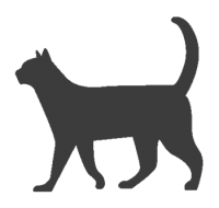 el gato inicio
