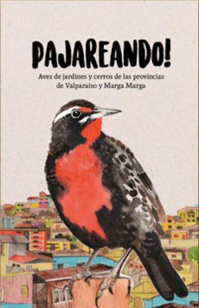 Pajareando: Aves de jardines y cerros de las provincias de Valparaíso y Marga Marga