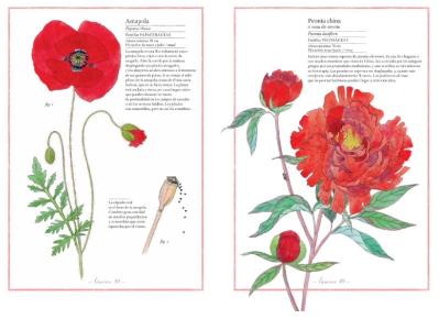 inventario-ilustrado-flores-3
